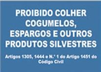 cogmelos1